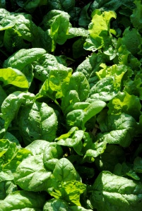 5-2-salad